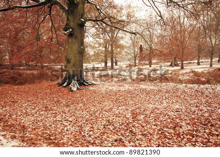 Winter landscape of Richmond Park, it is the largest park of the royal parks in London and almost three times bigger than New York's Central Park.