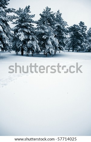 Winter landscape of snow covered pine trees with copy space - stock photo