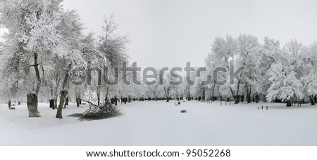 winter landscape of snowy forest