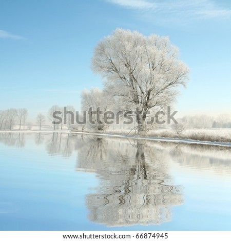 Winter landscape of trees covered with frost on a sunny December's morning. - stock photo