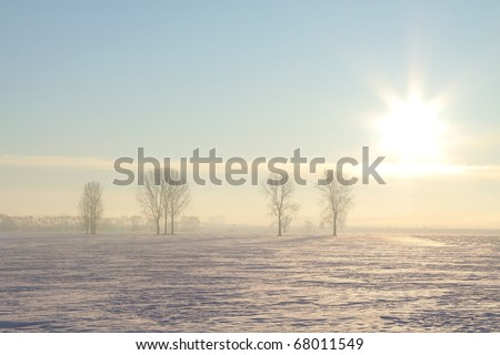 Winter landscape of trees in the field on a foggy December's morning. - stock photo