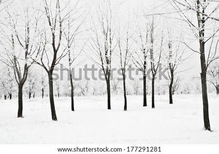 winter landscape of trees with snow - stock photo