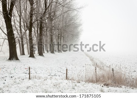 Winter landscape on a foggy day with a row of bare trees and electric fences - stock photo