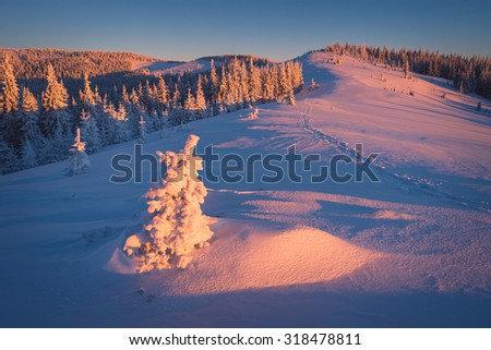 Winter landscape on a sunny morning. Little spruce under snow in the mountains - stock photo