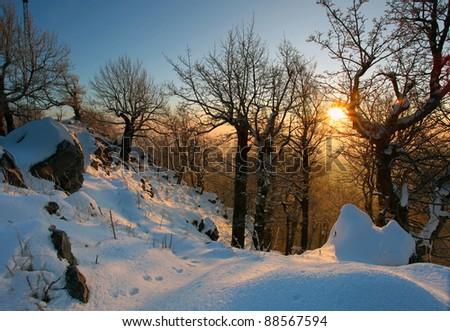 Winter landscape on a sunset with trees silhouette - stock photo