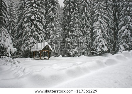 winter landscape on the forest - stock photo