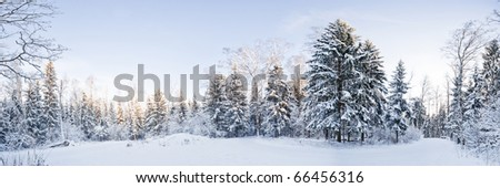 Winter landscape panorama - forest and snow - stock photo