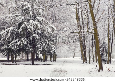 Winter landscape, park covered in snow