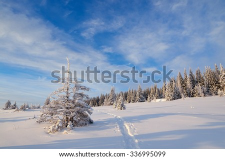 Winter landscape. Path in the snow. Sunny day. Fir forest in mountains - stock photo