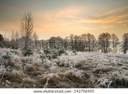 winter landscape. rime on trees and plants - stock photo