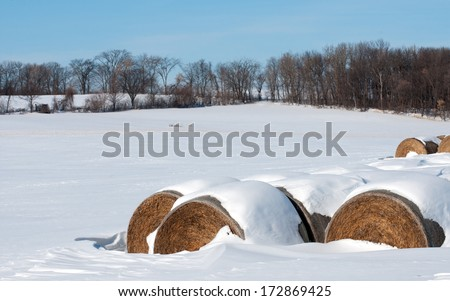 Winter landscape: round bales of hay in snow-covered farm field - stock photo