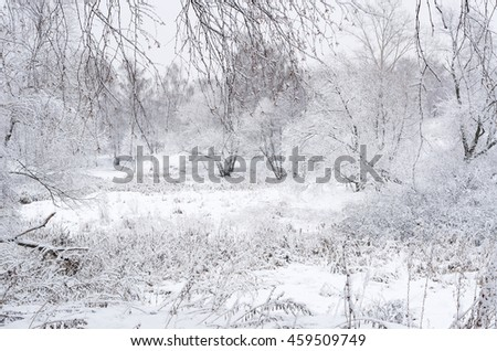 Winter landscape seen through branches. Trees and bushes covered in thick snow on a gloomy day.