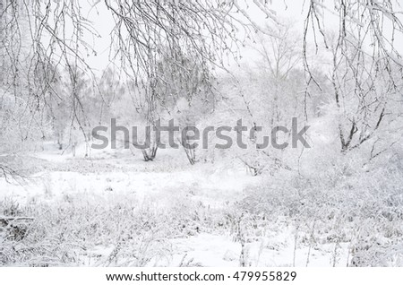 Winter landscape seen through branches, with focus on the branches. Blurred background with trees and bushes covered in thick snow on a gloomy day. Shallow depth of field.