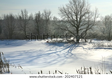 winter landscape snow-covered field near trees and blue sky in sunlight