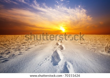 winter landscape - sunset in the snow field - stock photo