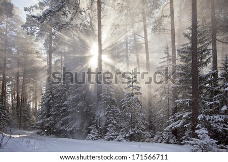 Winter landscape. The morning after a heavy snowfall. Sun and snow
