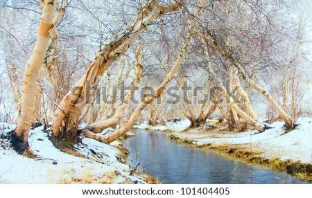 Winter landscape. The river is not covered by ice in the woods - stock photo