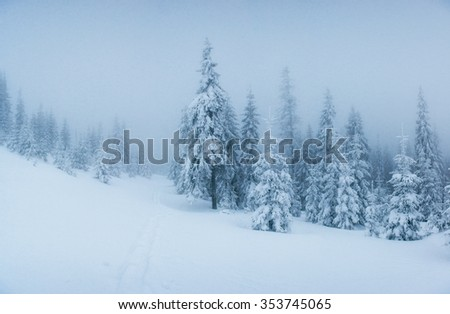 winter landscape trees in frost and fog - stock photo