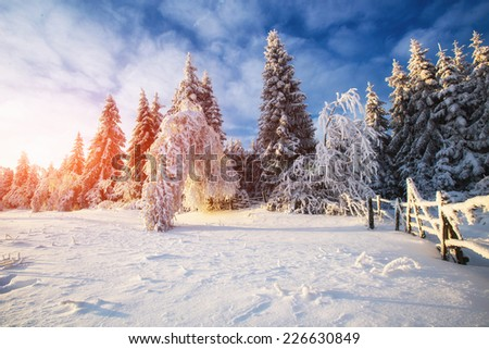 winter landscape trees in iniyi  - stock photo