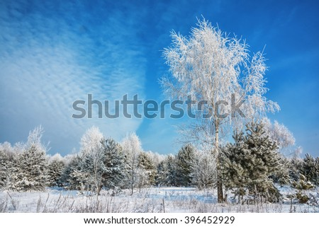 Winter landscape. Trees on the side of the forest covered with snow and frost on a sunny morning - stock photo