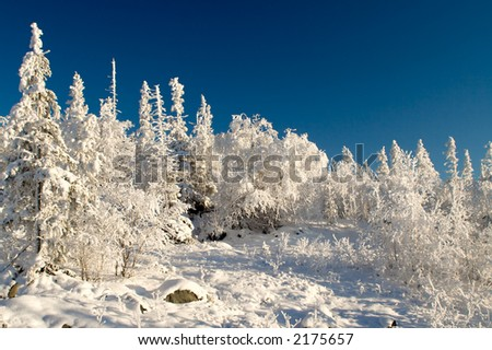 Winter landscape, trees under snow after snow-storm - stock photo