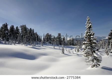 winter landscape trees under snow after snow-storm - stock photo