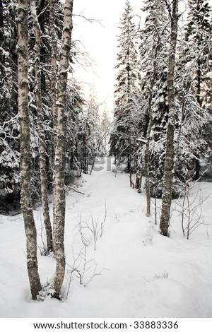 Winter landscape - trees under snow in Finnish Lapland - stock photo
