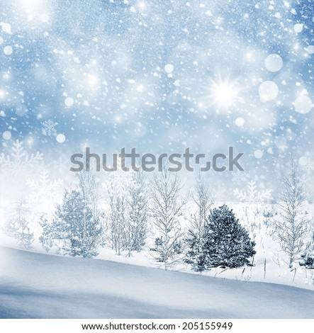Winter landscape. Winter Forest. - stock photo
