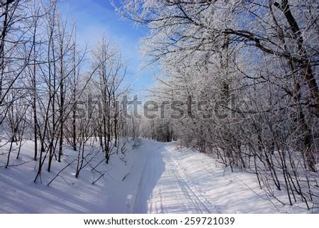 winter landscape, winter forest - stock photo