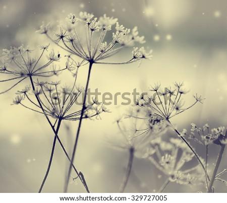 Winter landscape.Winter scene .Frozenned flower/ selective focus - stock photo