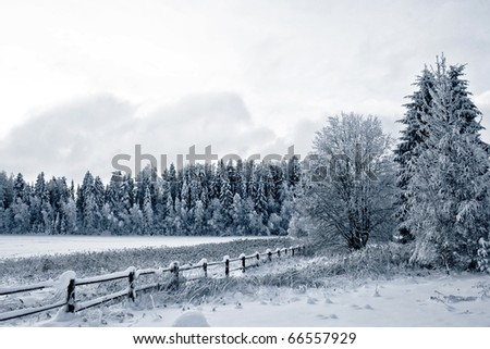 Winter landscape. Winter wood and lake covered with ice - stock photo