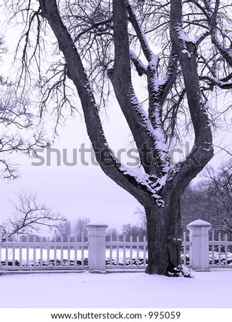 Winter landscape with a fence and tree