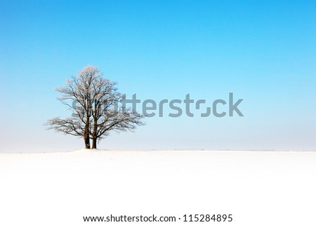 winter landscape with a lone tree in field - stock photo