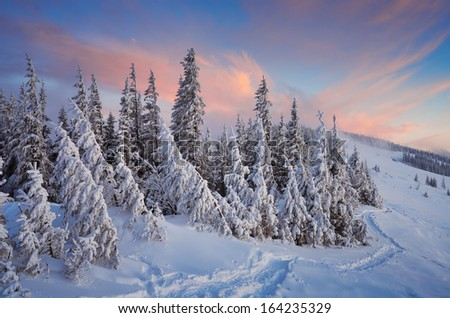 Winter landscape with a mountain forest. Sunset in the mountain valley. Carpathians, Ukraine - stock photo