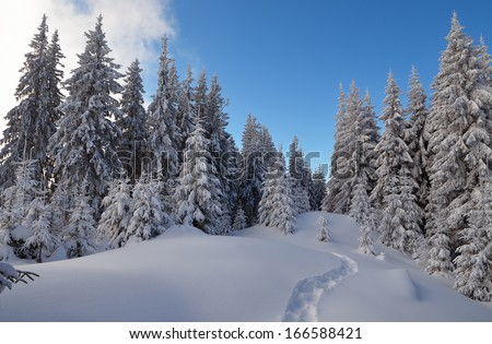 Winter landscape with a path in the snow. Frosty day in a mountain valley with pine forest