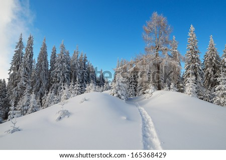 Winter landscape with a path in the woods. Carpathian mountains, Ukraine, Europe - stock photo