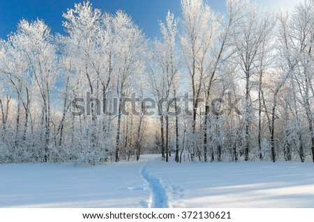 Winter landscape with a road in the forest.  - stock photo