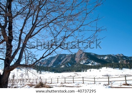Winter landscape with a tree on the foreground, Colorado - stock photo