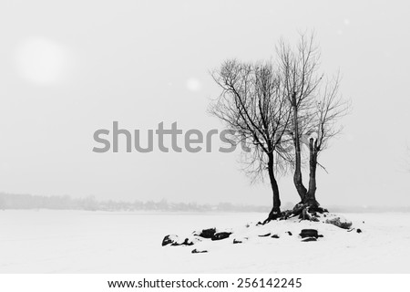 Winter landscape with barren trees - stock photo