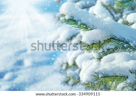 Winter landscape with branches of a snow-covered coniferous tree - stock photo