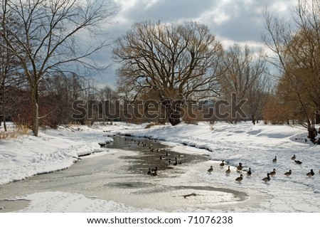 Winter landscape with ducks - stock photo