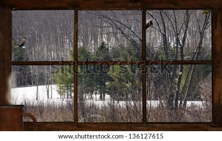 Winter landscape with eagles, as  seen through a rustic cabin window with a steaming mug of coffee resting on the window sill.  Part of a series. - stock photo