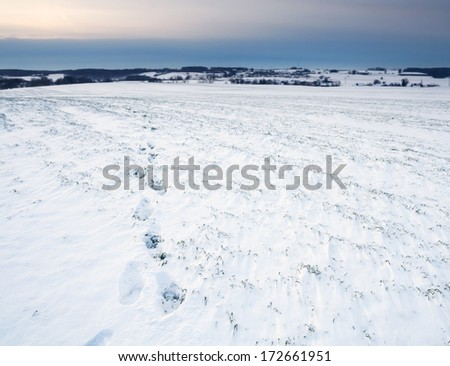 winter landscape with field of snow