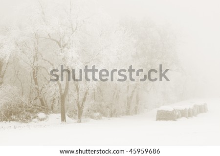 Winter landscape with fog - stock photo