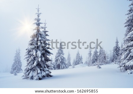 Winter landscape with fog in a mountain forest - stock photo