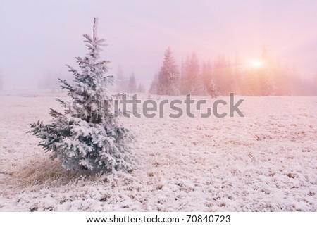 Winter landscape with fog. Sunrise - stock photo