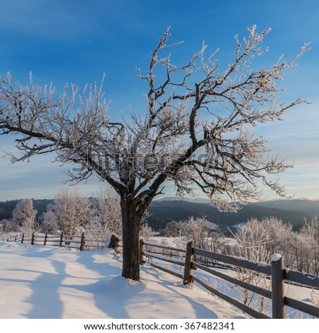 Winter landscape with frosted, snowy tree and fence in mountains village - nature background