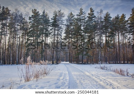 Winter landscape with frozen forest - stock photo