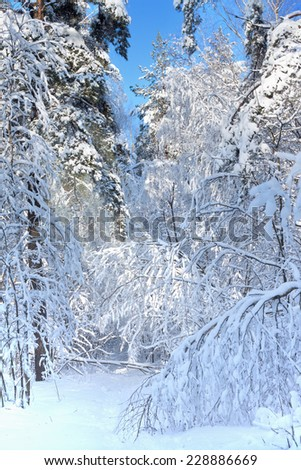 Winter landscape with frozen trees after blizzard - stock photo
