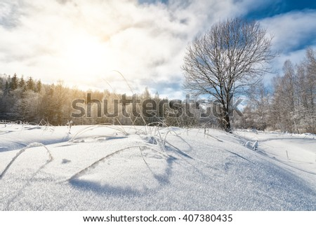 Winter landscape with hoar frost covering a bare tree and woods, snowdrift on foreground; copy space - stock photo